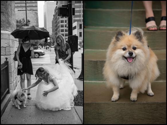 Katie+Puppy.png